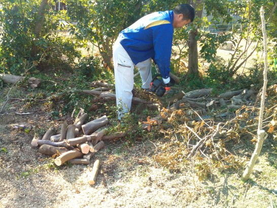 いらなくなった庭木などを薪ストーブの燃料としてもらう