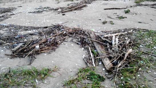 薪として海で流木や竹、捨てられているスミなどを拾う