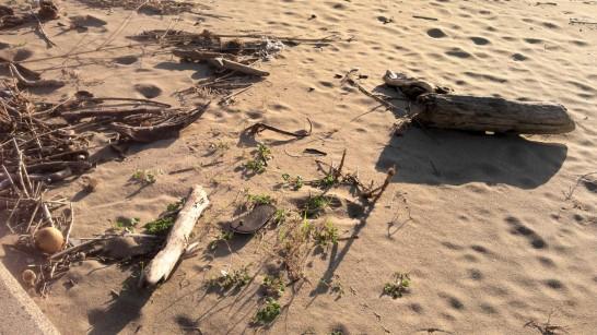 ロケットストーブの薪は浜に落ちている流木なのでタダです